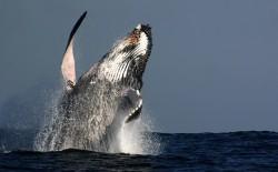 Wal beobachtung